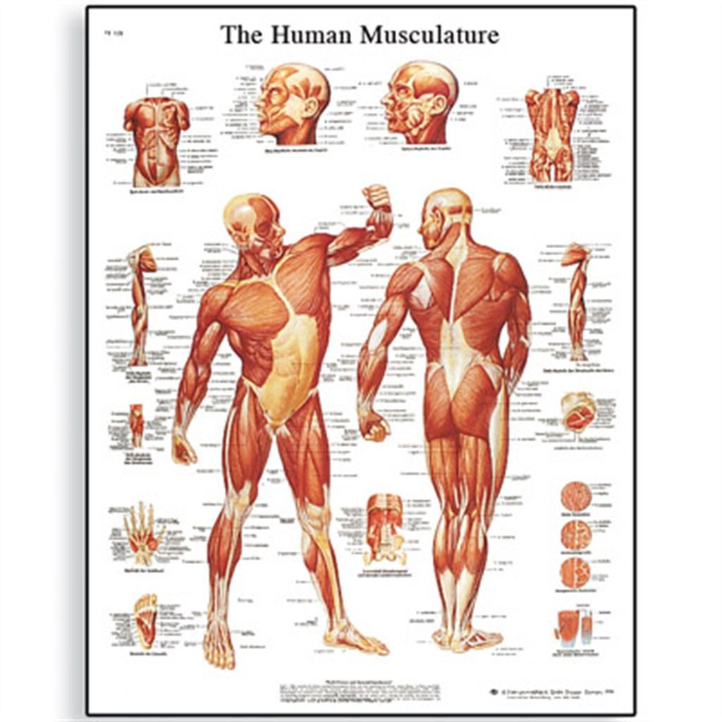medical chart spine charts and nervous system charts - Google Search ...