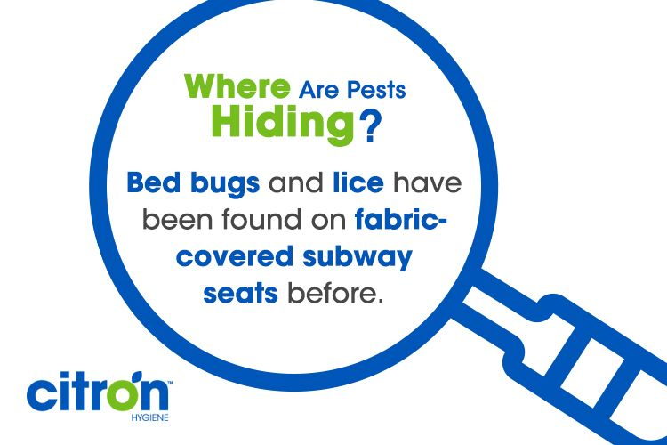 Bed bugs can be found almost anywhere even public transit