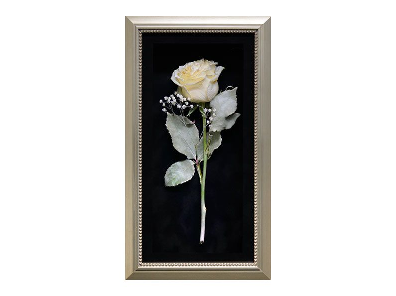 Preserve A Single Rose So That It Will Last For A Lifetime See More By Fantastic Blooms Flora Flower Shadow Box How To Preserve Flowers Flower Petal Jewelry