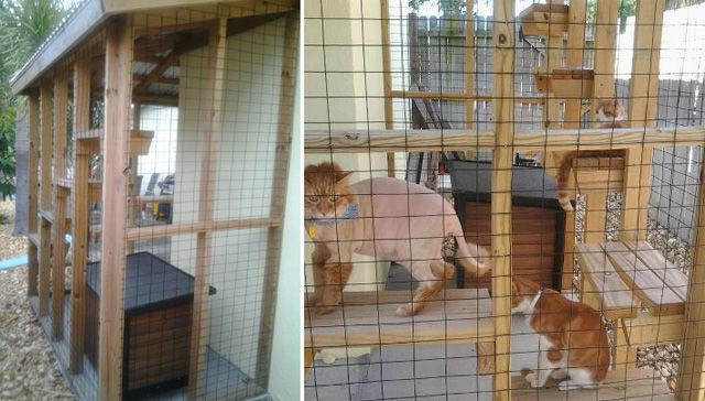 This is a beautiful cat patio, but WHY IS THE CAT SHAVED LIKE THAT?