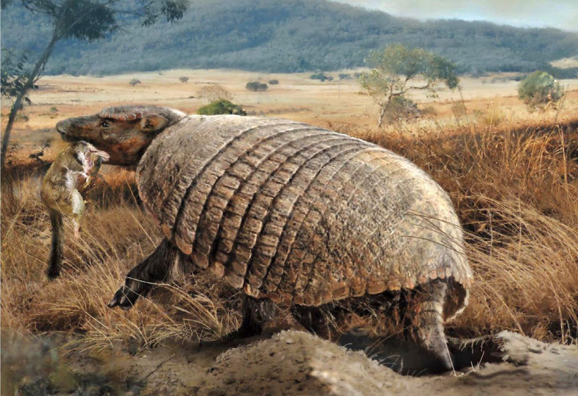Macroeuphractus Is A Large Extinct Armadillo Of South