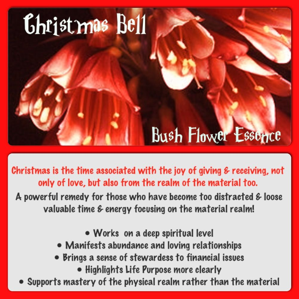 The Power Of Flowers Christmas Bell Australian Bush Flower Essence Flower Essences Flower Remedy Natural Therapy