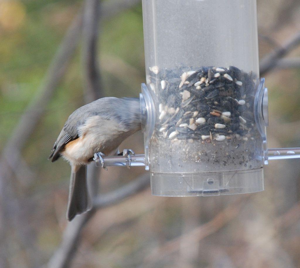 For the birds how to attract birds birds bird feeders