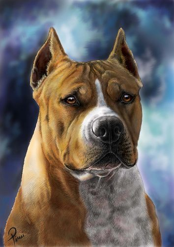 Amstaff Dogs Beasts Or Lovers Dog Art Dog Paintings