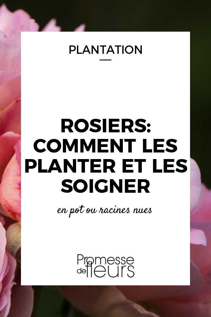 Rosiers : comment les planter (avec images) | Rosier ...