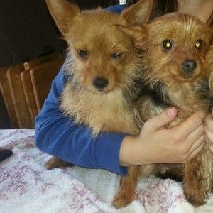 Mom and daughter looking for a forever home together... Both girls are very loving house broken.