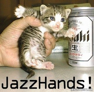 Cute & Funny Kitten | New Pictures-Images - Pets Cute and Docile ...