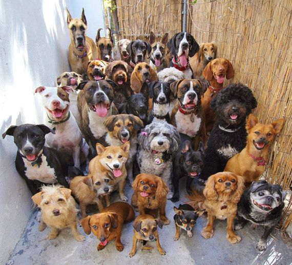 Animal shelter dog DONATION Donate dog leash or by bellaTAZ