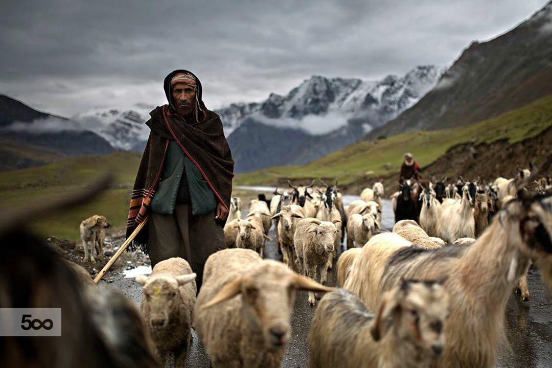 Shepherd by Alessandro Bergamini - Photo 123754189 - 500px
