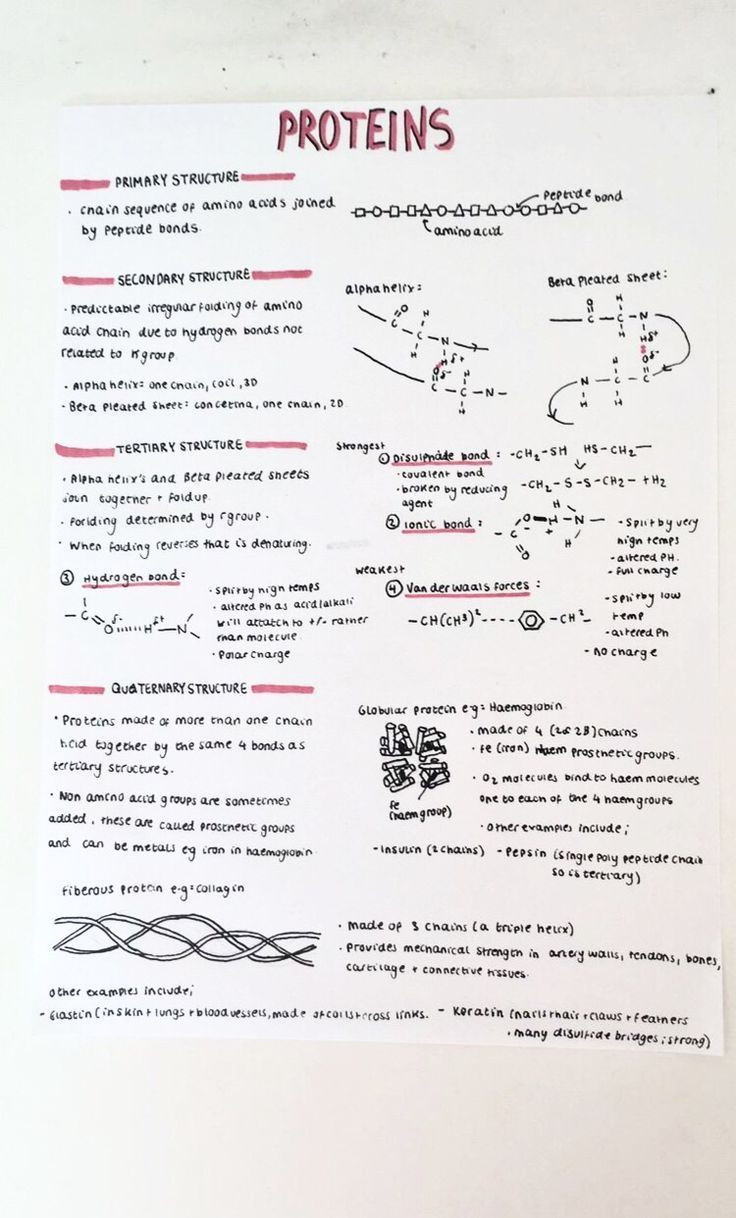 A-Level-Notizen zur Biologie; Proteine - RECİPES CENTER #aestheticnotes