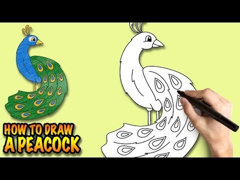 How To Draw A Peacock With Beautiful Feathers – My How To Draw