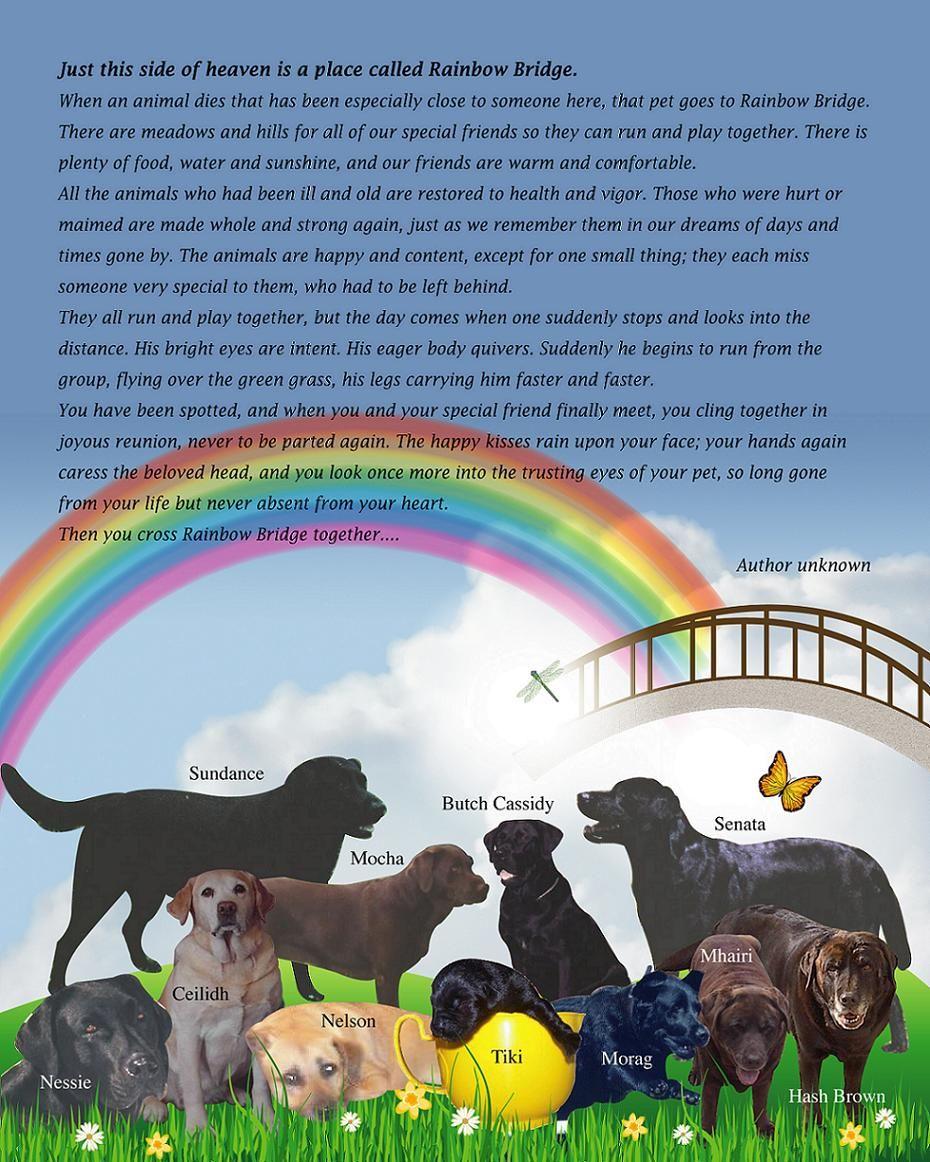 Rest In Peace My Sweet Brandy Until We Cross The Rainbow Bridge Together Rainbow Bridge Dog Rainbow Bridge Dog Heaven