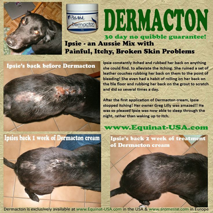 Learn More About Dermacton Dog Skin Allergies Dog Allergies