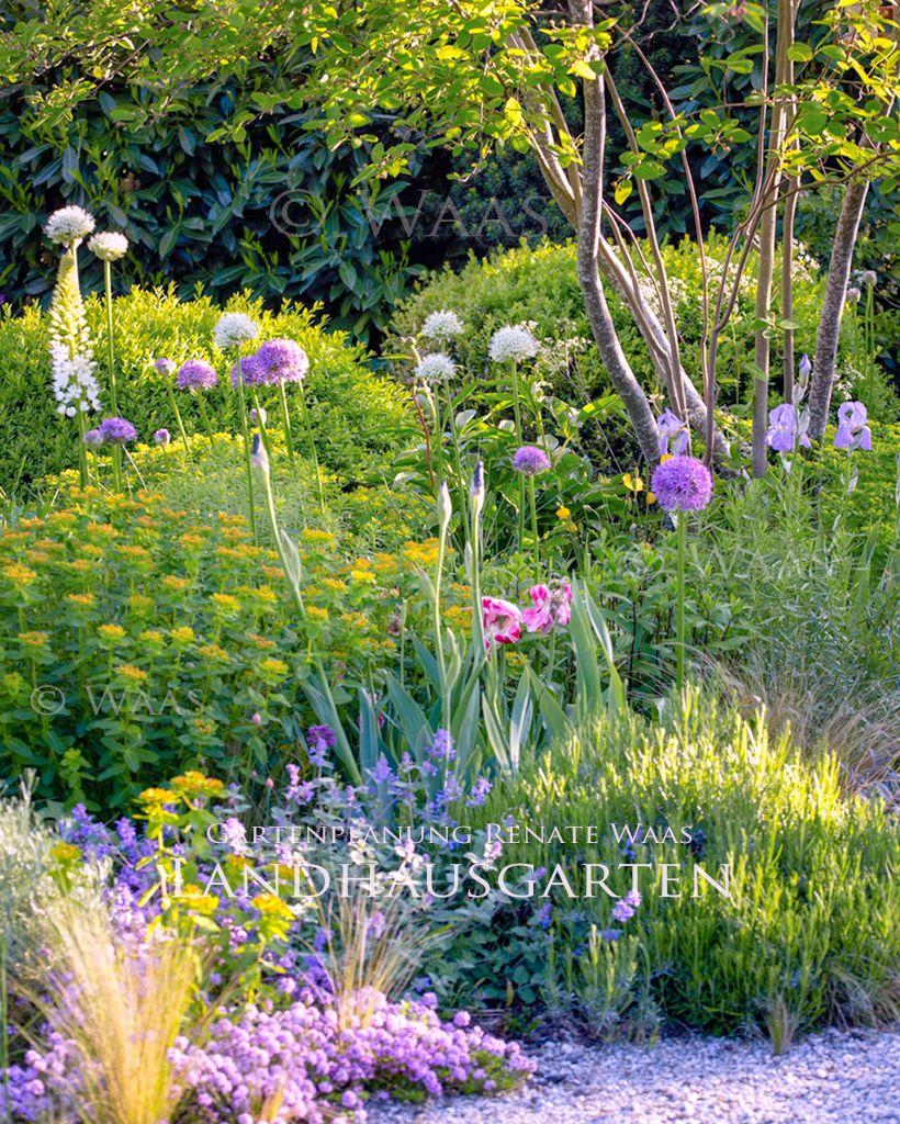 Moderner Landhausgarten – Cottagegarten. Welche pflegeleichten Pflanzen passen?