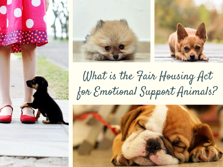 What Is The Fair Housing Act For Emotional Support Animals Emotional Support Animal Emotional Support Service Animal