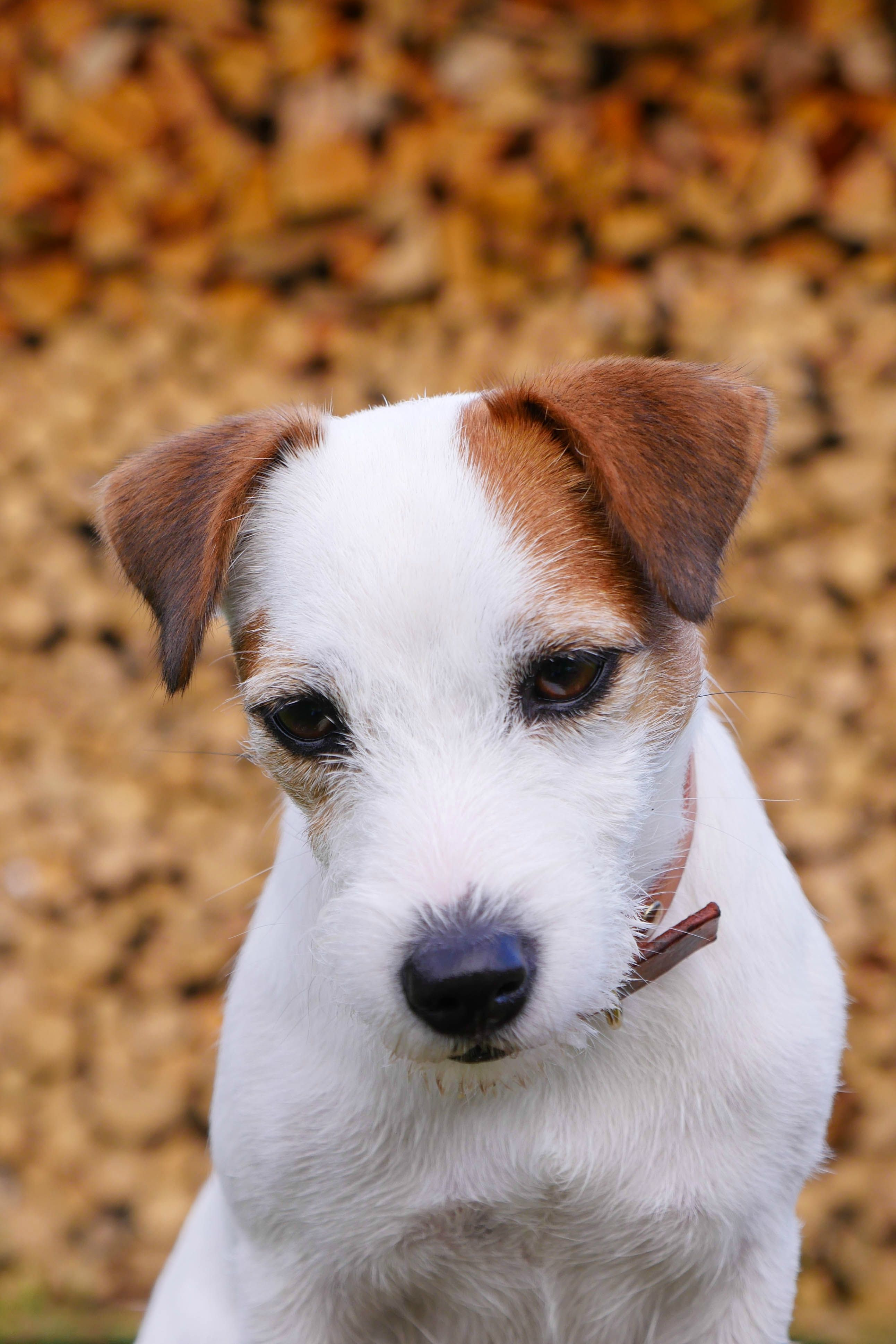 Recycled Rope Leash Evergreen Jack Russell Jack Russell Terrier