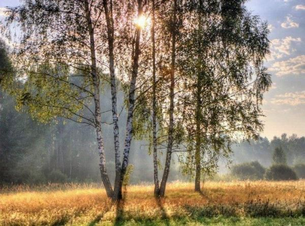 красивейшие фото природы средней полосы россии: 19 тыс ...