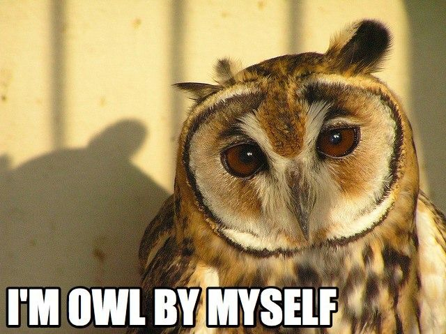 Funny Meme Puns : Animal puns ewe can t live without animal puns animal and owl