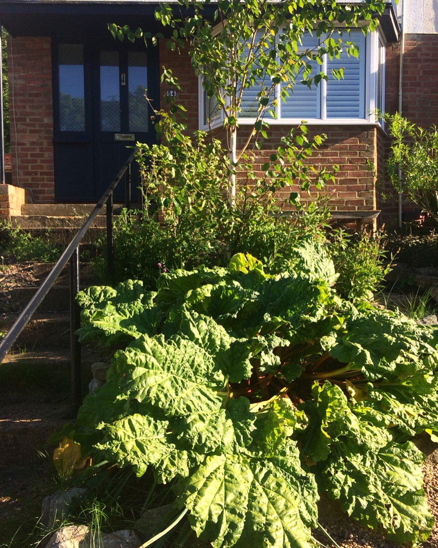 Front garden food forest   Landscape design, Permaculture ...