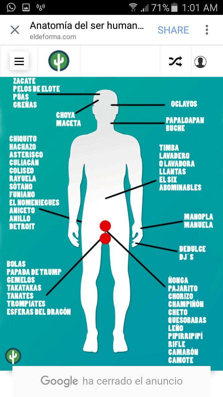Excepcional Anatomía De Un Camarón Componente - Anatomía de Las ...