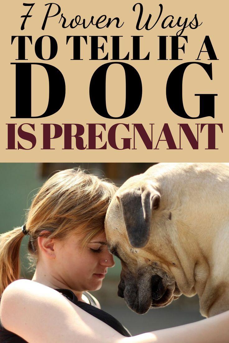 7 signs a dog is pregnant pregnant dog dog health dog