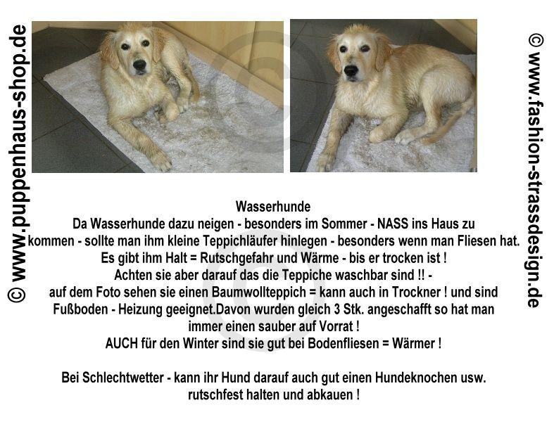 Nasser Hund will ins Haus bei Fliesen und Laminat sollte