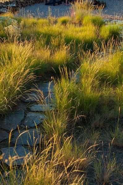 Central Oregon Native Bunch Grass Lawn High Desert