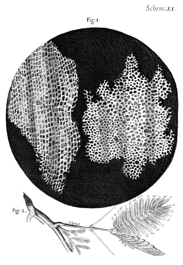 Cell Theory Wikipedia The Free Encyclopedia Cell Theory Robert Hooke Encyclopedia Illustration
