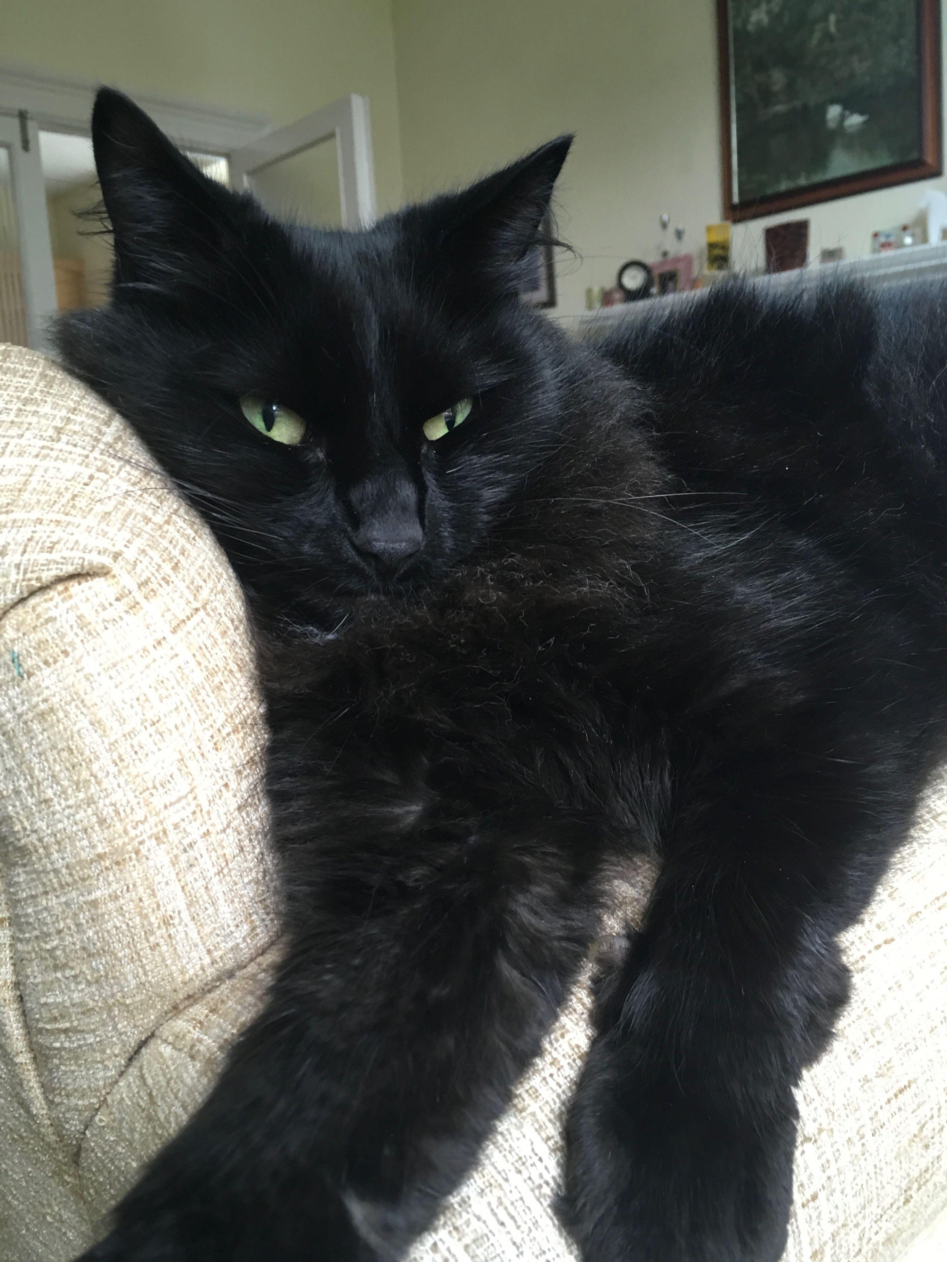 The beautiful Sebastian.   Animals, Cats, Love and respect