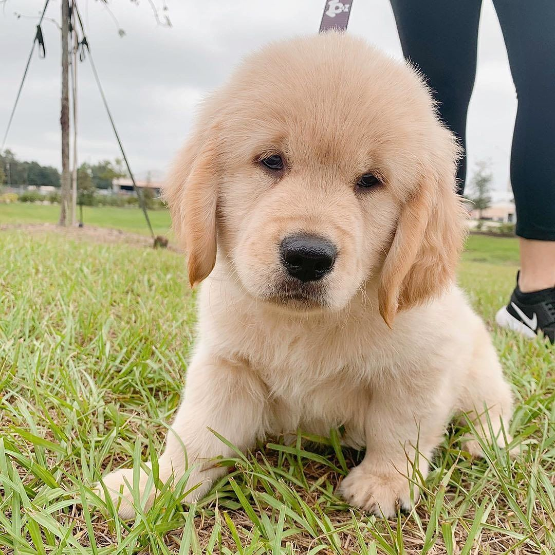 2 Dogs Best Dogs Smiling Dogs Really Cute Dog Fun Dog Cute Dog Things Best Puppy Cute Dog Quotes Dog Space Old In 2020 Really Cute Dogs Cute Dogs And Puppies Cute Dogs