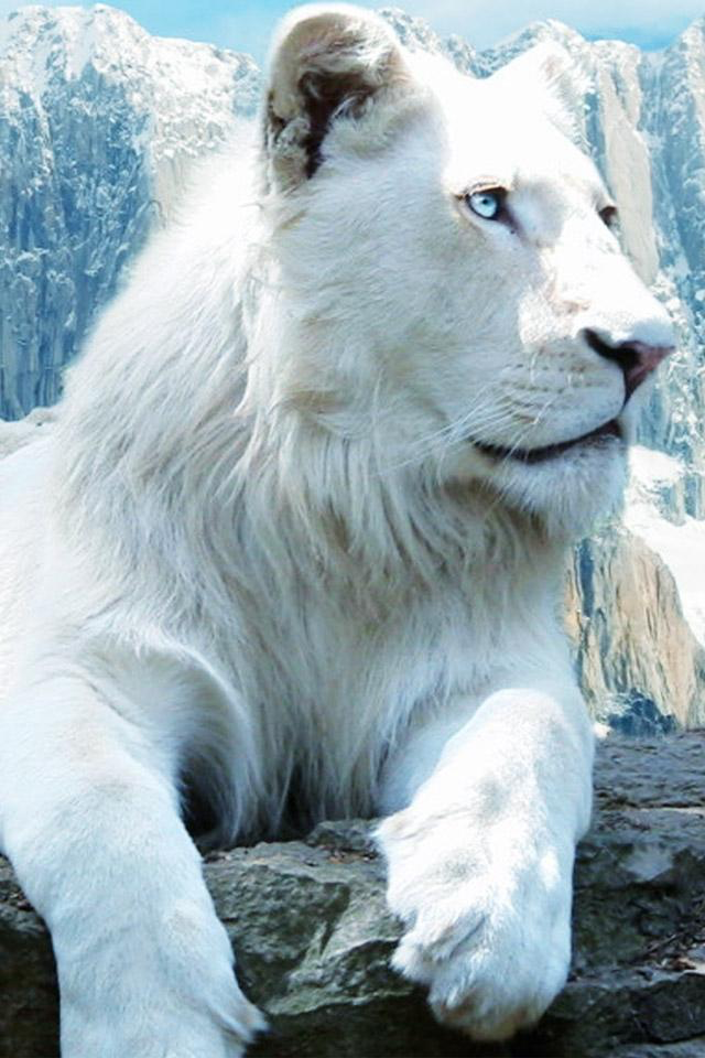 Pin By Racoones On Cats White Lion Images Animals White Lion