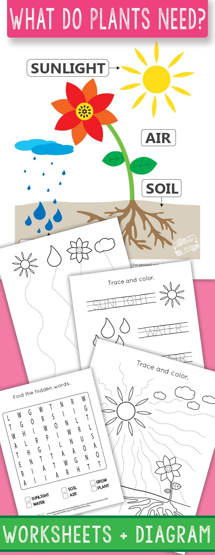 What do Plants Need to Grow Worksheets - itsybitsyfun.com   Plants  kindergarten [ 1800 x 700 Pixel ]