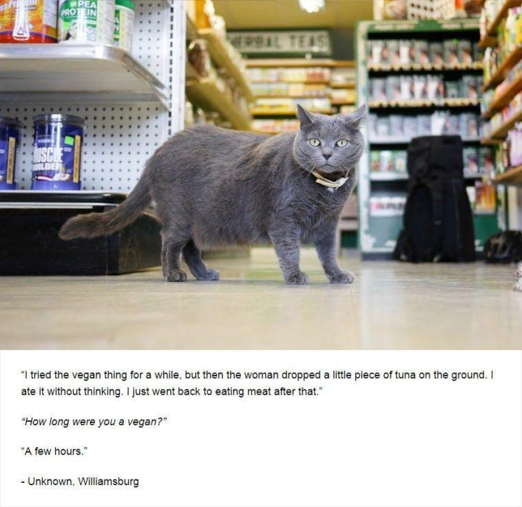 Dark Secrets Revealed By Cats 16 Pics Funny animals