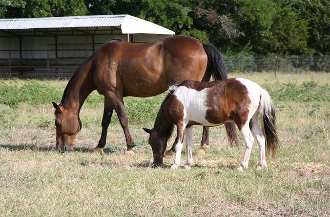Meet Our Horses | ManeGait - Therapeutic Horsemanship