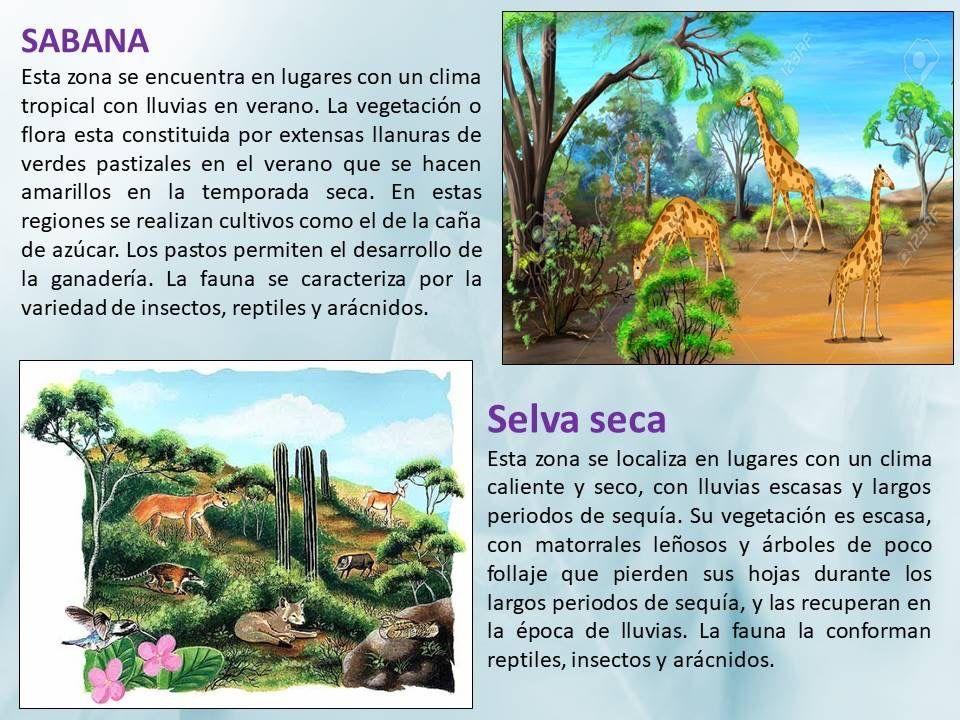 Pin De Norma Mb En Educativas Primara Pastizal Vegetacion Tropical