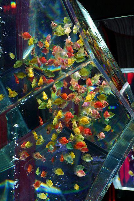 金魚(アートアクアリウム展)