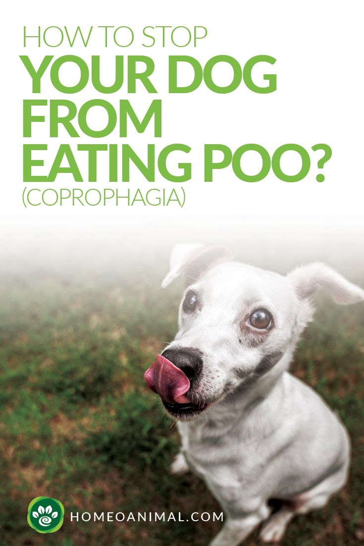 How To Stop Your Dog From Eating Poo Coprophagia Dogs Dog