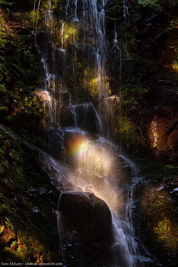 Berry Creek Falls Prism ~ Big Basin Redwoods State Park, California ~ Sean McLean