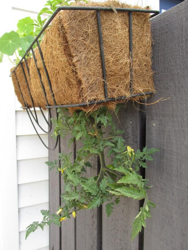 How to Make Unusual Gardens With Flowering Hanging Baskets is part of Tomato hanging basket, Hanging baskets, Plants for hanging baskets, Window baskets, Garden containers, Edible plants - Add more eyelevel blooms to your flower garden by copying one of these hanging basket ideas, then keep plants lush all season with care tips