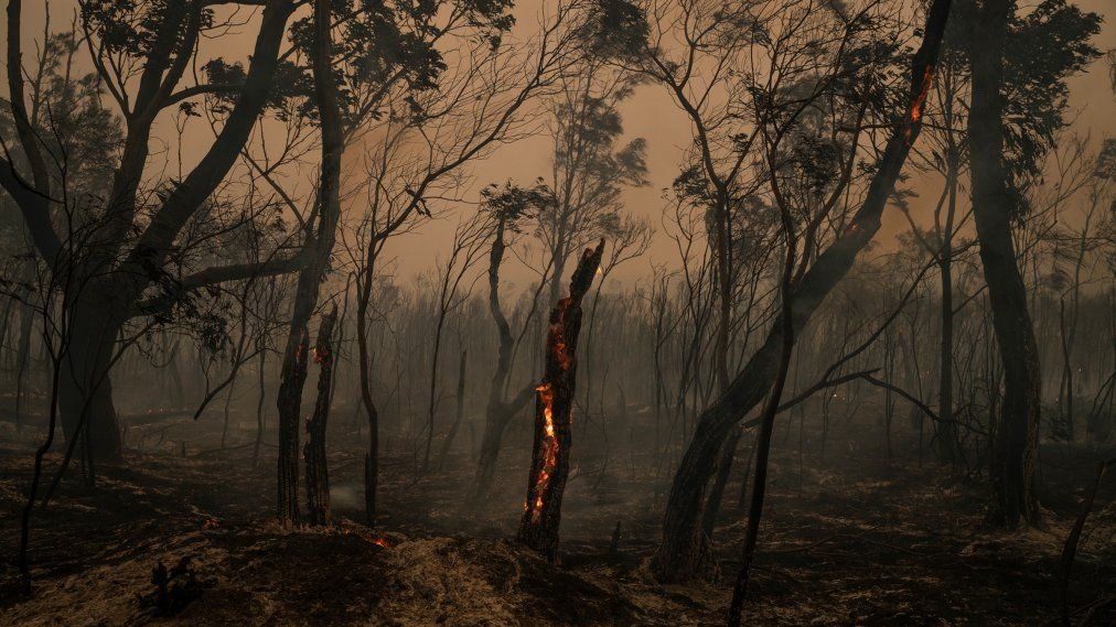 Dead Animals Line The Road In Fire Ravaged Australia In 2020