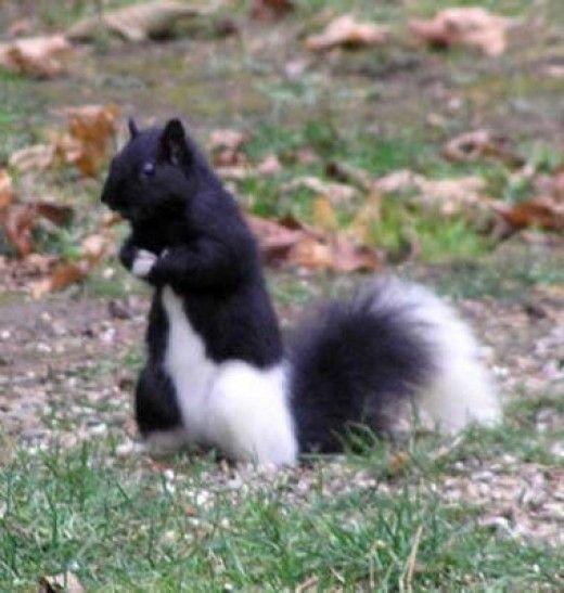 Animal with Mutations or Deformities