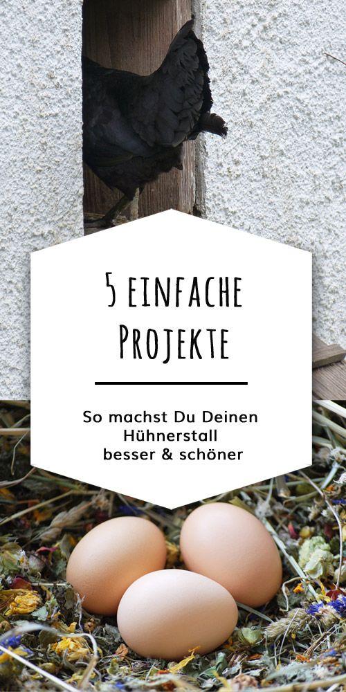 Photo of Den Hühnerstall verschönern