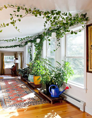 House Plants Vines inside vines | teleportation | pinterest | indoor, interiors and house
