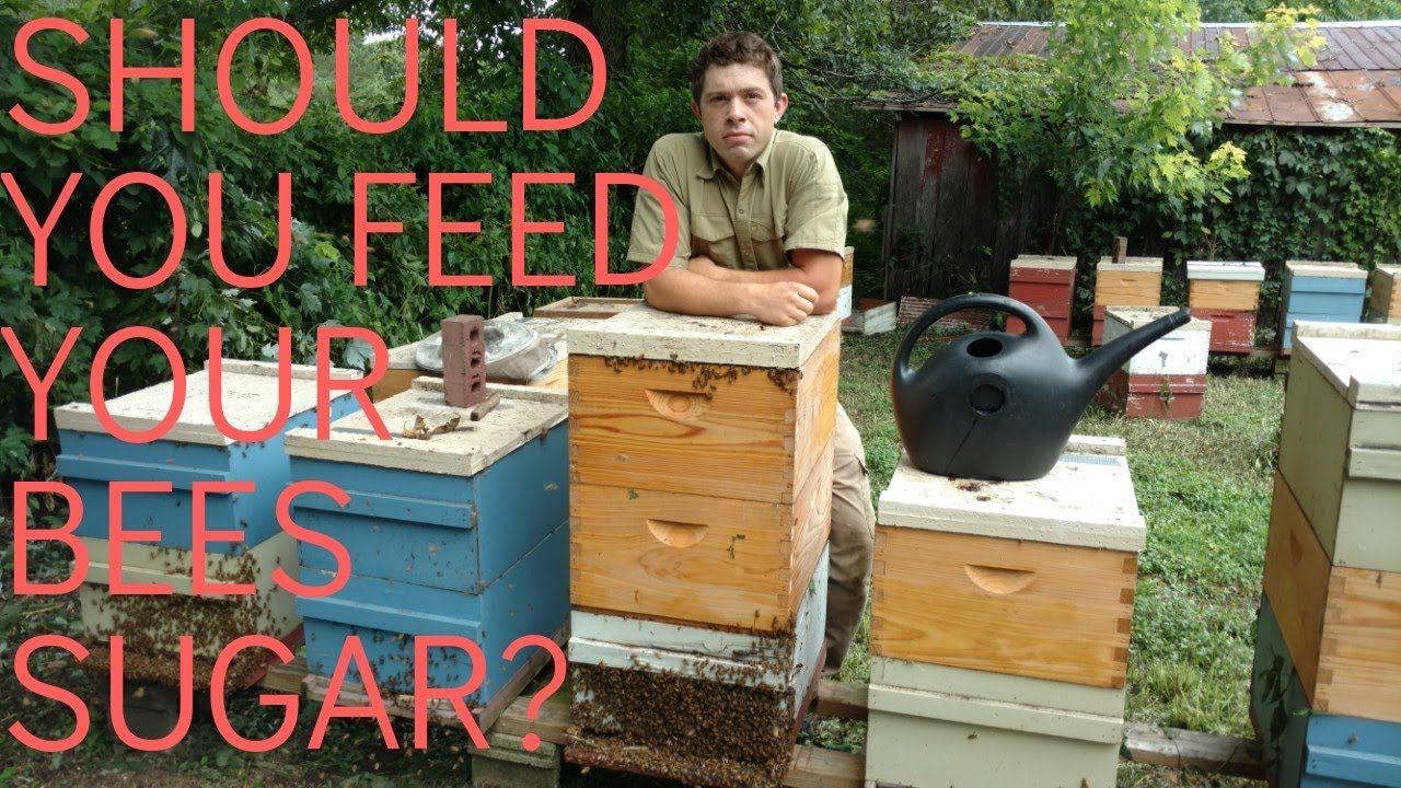 YouTube in 2020 Feeding, Bee keeping, Bee