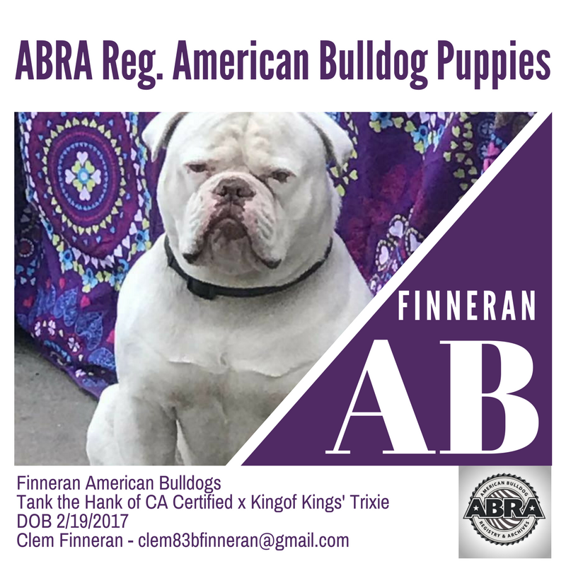 Pin on American Bulldog Breeders
