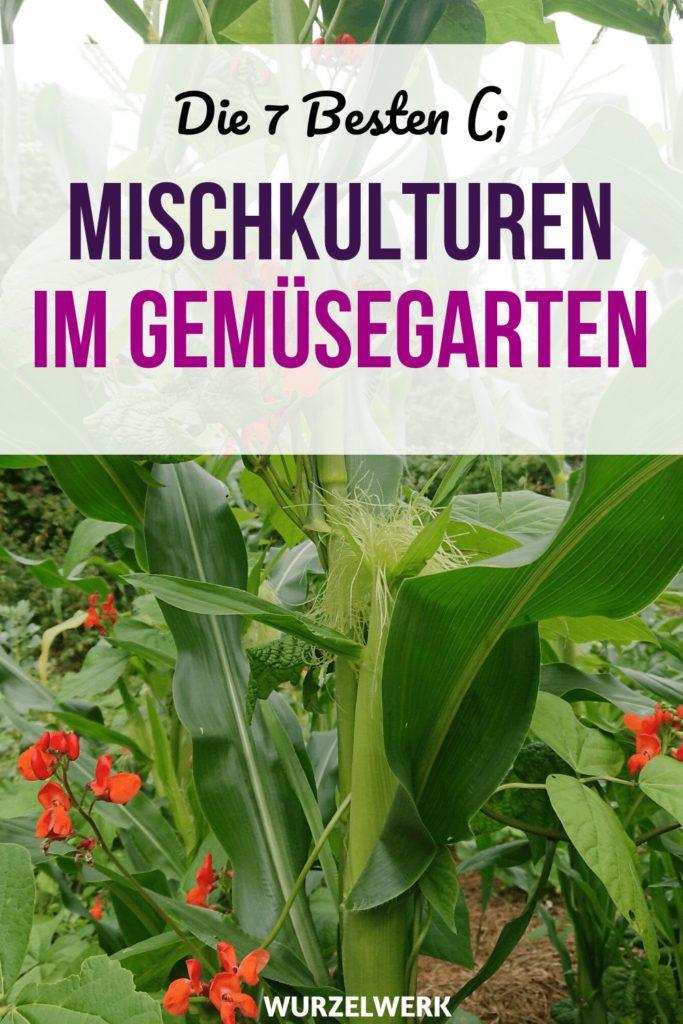 Die 7 wirkungsvollsten Mischkultur-Pflanzgemeinschaften ...