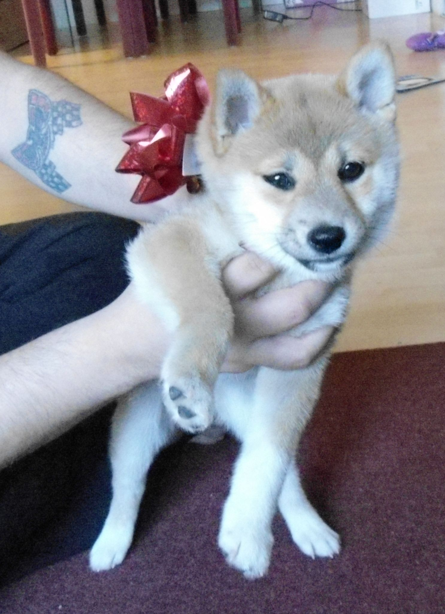 For Me Aww You Shouldn T Have Cute Animals Shiba Inu Animals