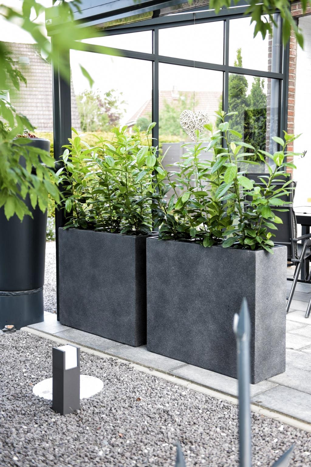 Pin Von Rosella Pfeffer Auf Exterieur Bepflanzung Pflanzkubel Pflanzen