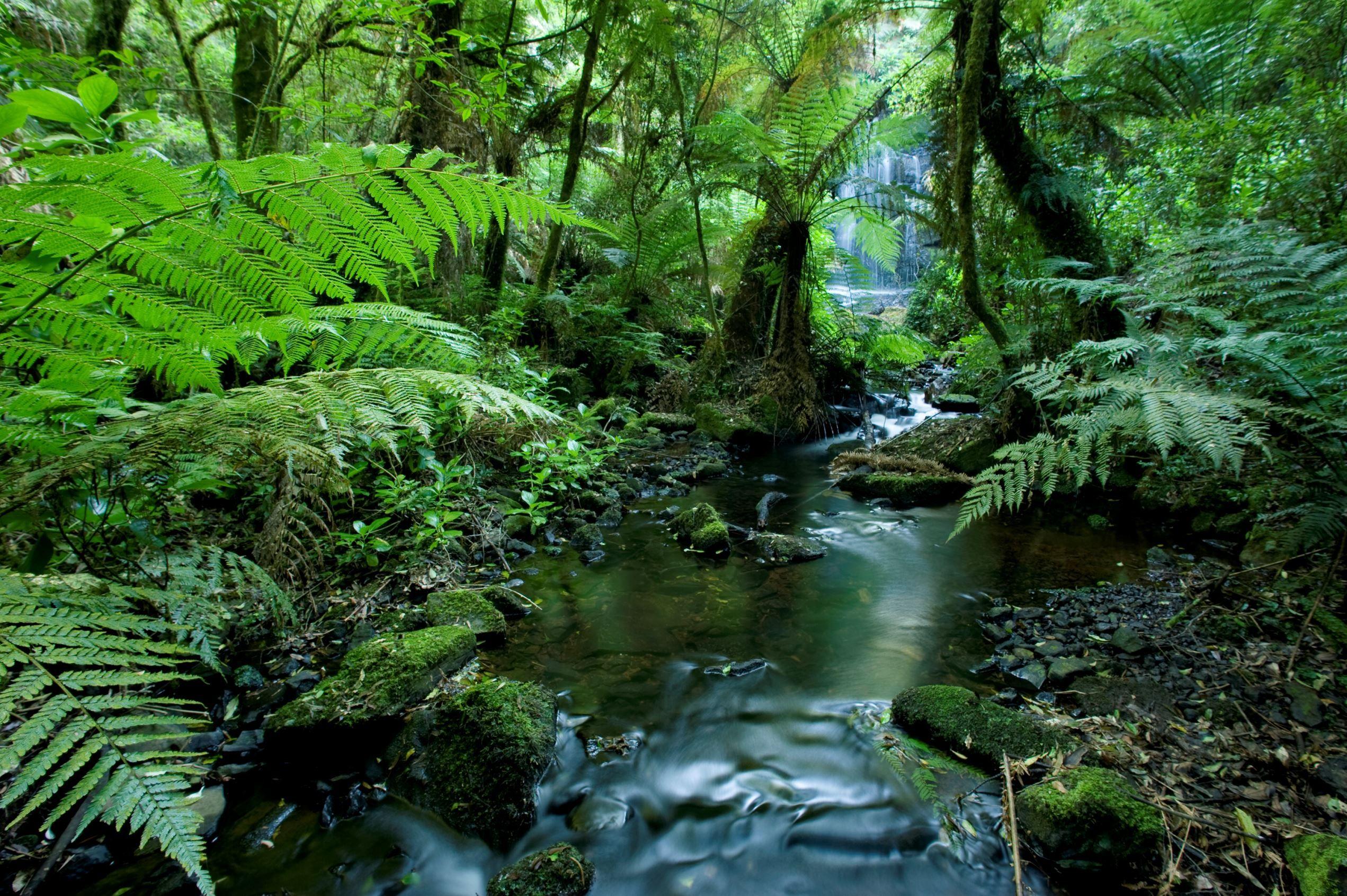 A stream running through a tropical rainforest in Brazil