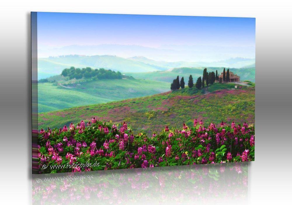 naturbilder landschaft bild toskana italien fr hling wandbilder xxl unbedingt. Black Bedroom Furniture Sets. Home Design Ideas